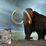 Mamutes e mastodontes