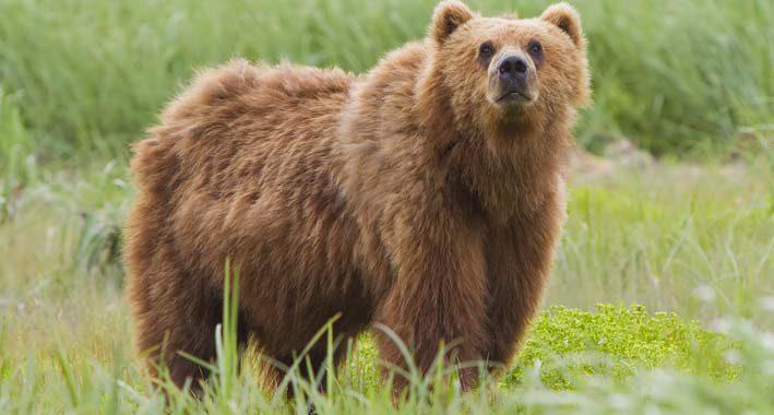 28-Informacoes-muito-curiosas-sobre-os-ursos