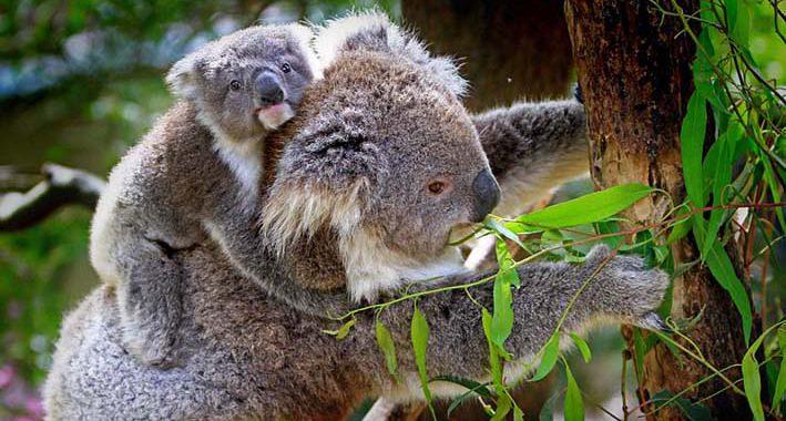 Quais os animais mais nojentos do mundo? Conheça 15 respostas