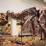15 Pequenas curiosidades sobre um grande dino: O Tiranossauro