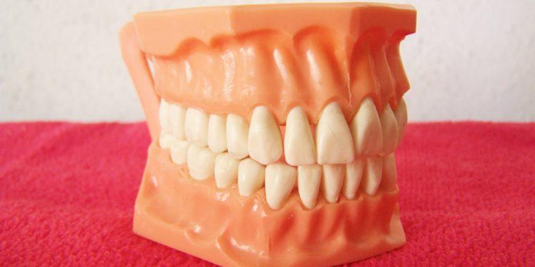 curiosidades-sobre-os-dentes